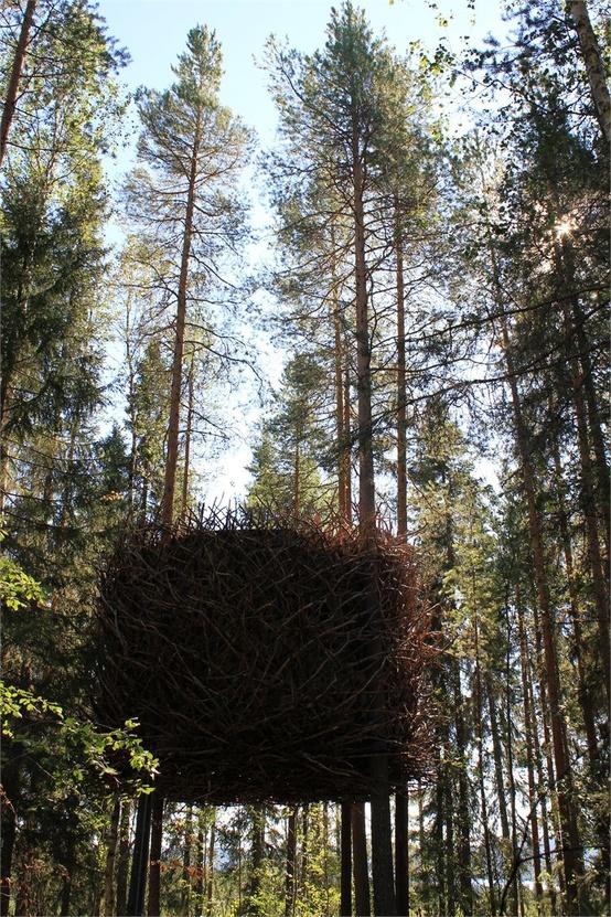 treehotel_06