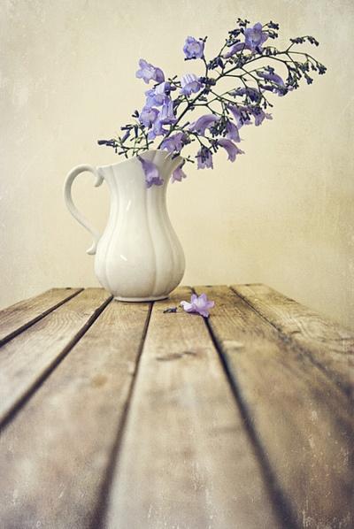violeta_14
