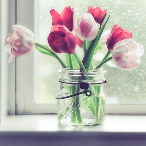 tulipanes01