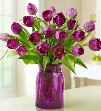 tulipanes11