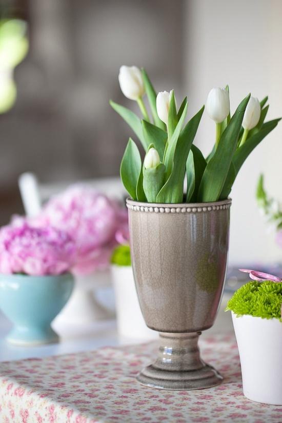 tulipanes15