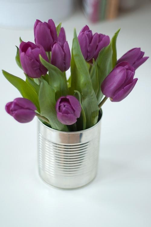 tulipanes17