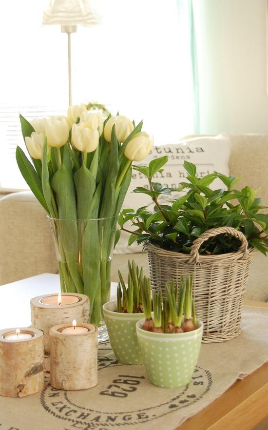 tulipanes20