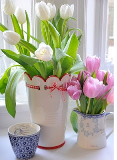 tulipanes24