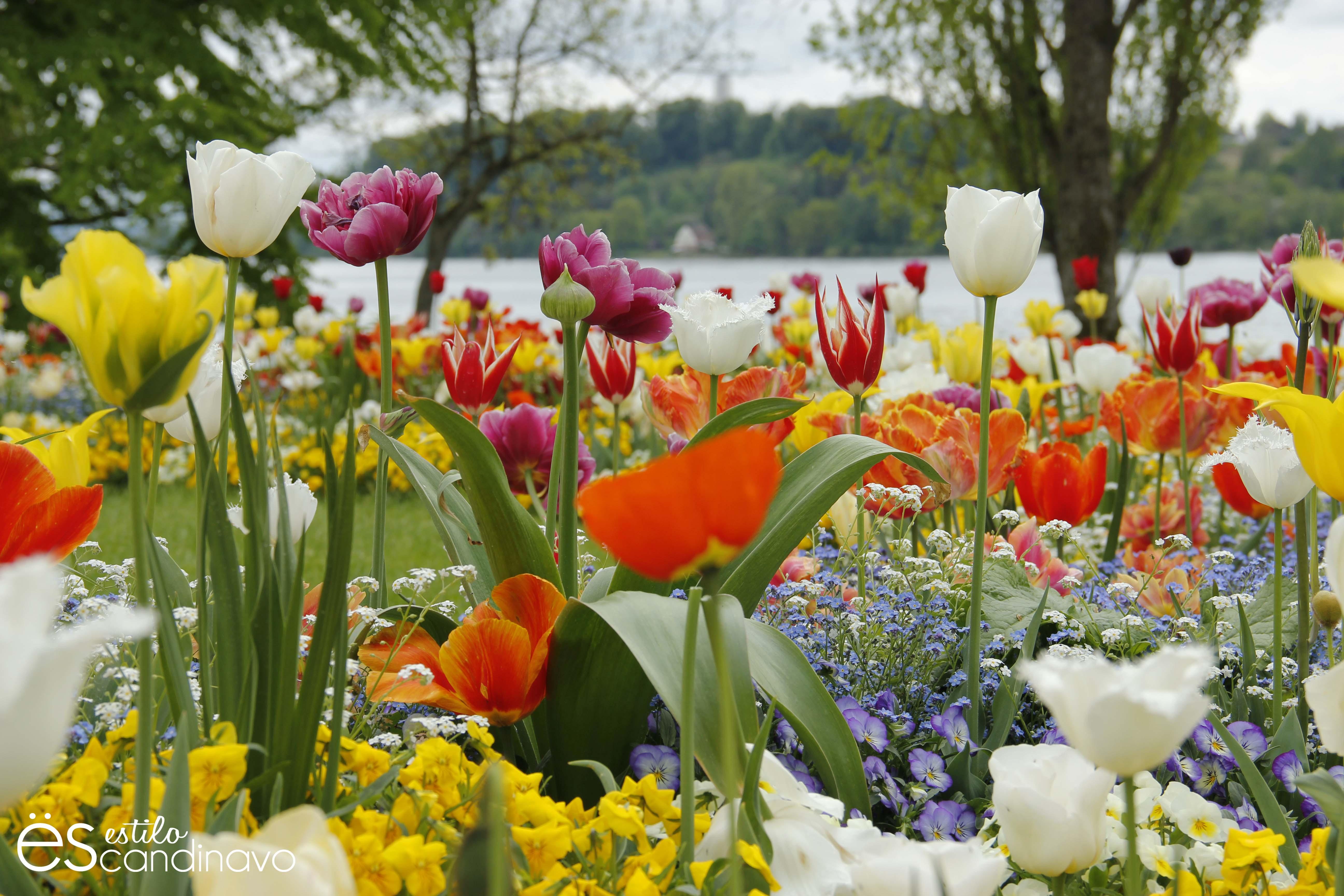 Imagenes Flores Caricatura Buscar Con Google: Buscar Imagenes De Flores. Simple Ramo De Liliums