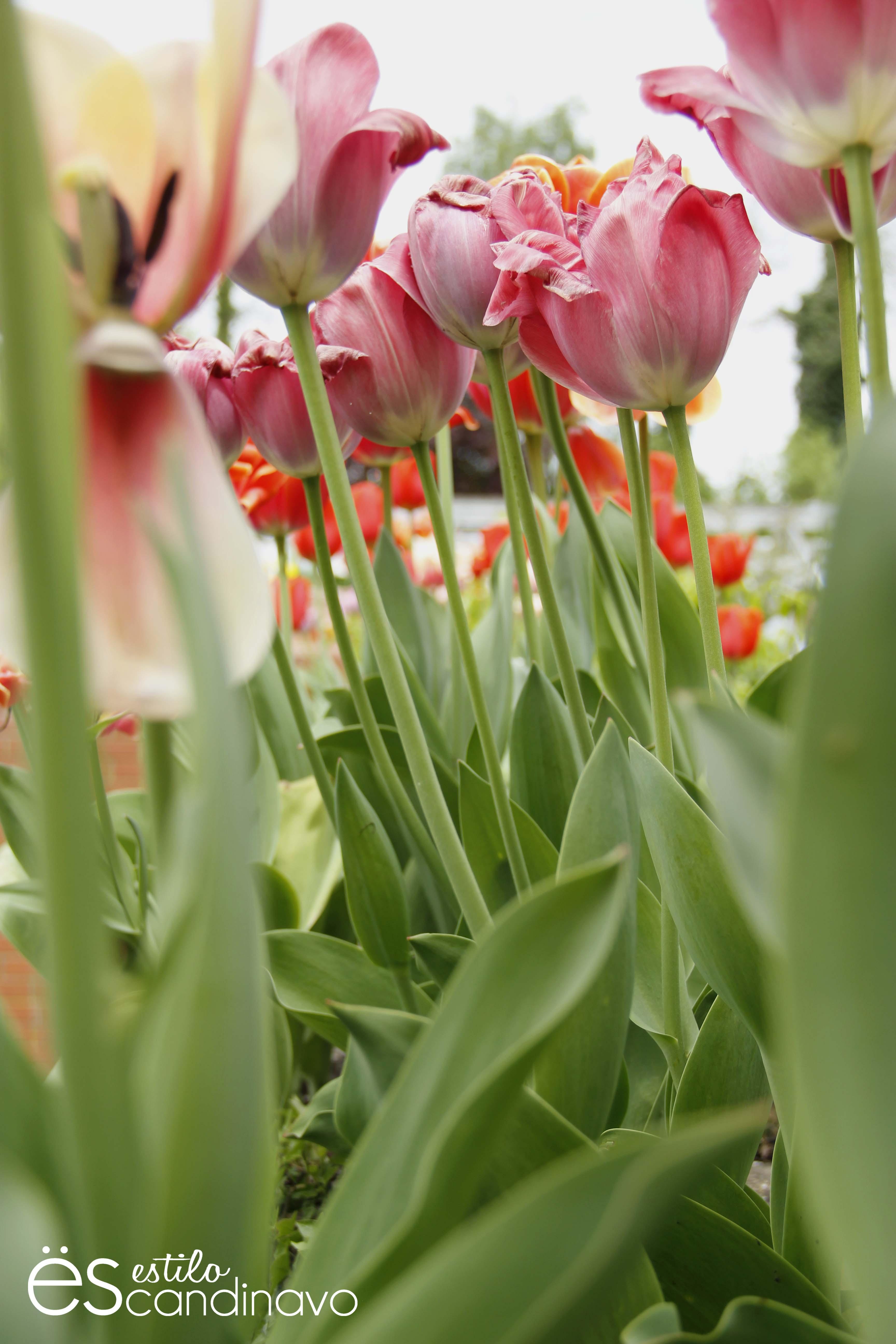 isla-de-las-flores11