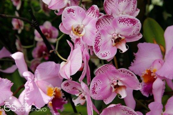 isla-de-las-flores14