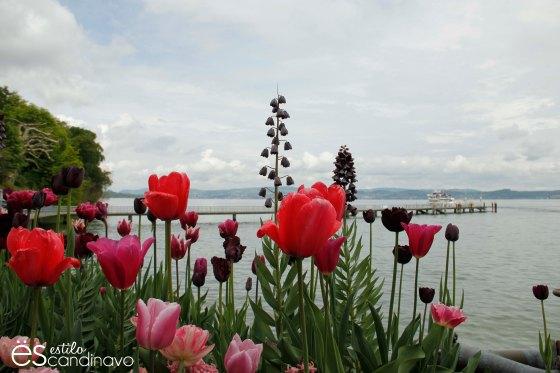 isla-de-las-flores19
