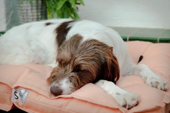 cama_perro_sleepy_brownie_02