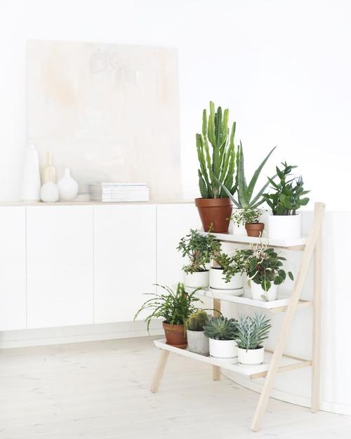 plantas-en-casa-04