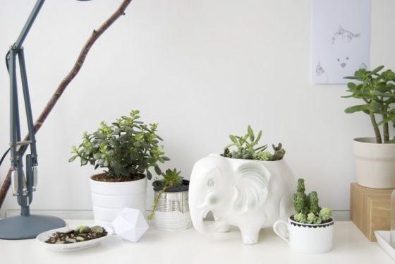 plantas-en-casa-05