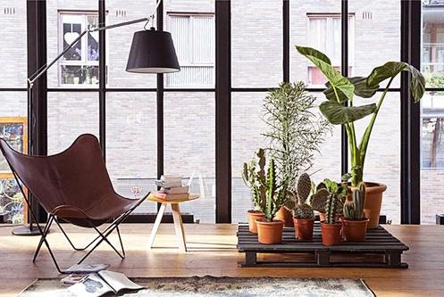 plantas-en-casa-07
