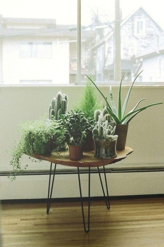 plantas-en-casa-09