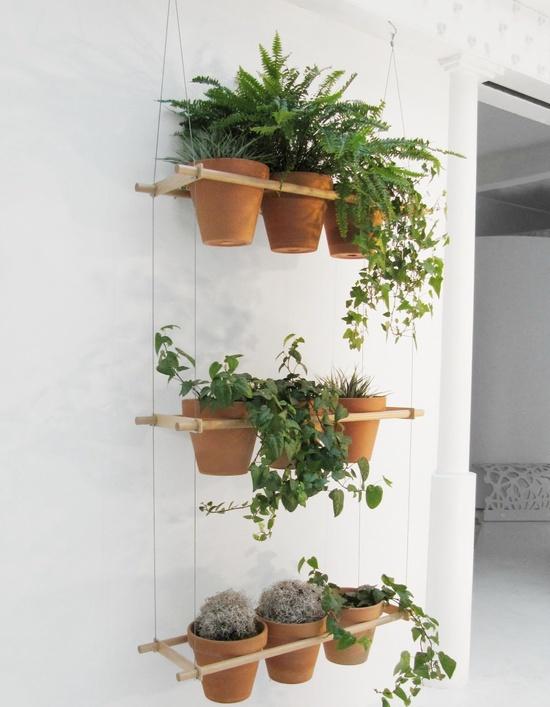 plantas-en-casa-14