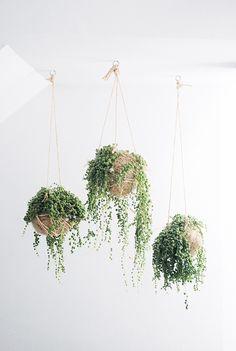 plantas-en-casa-16