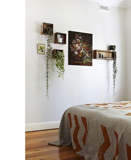 plantas-en-casa-17