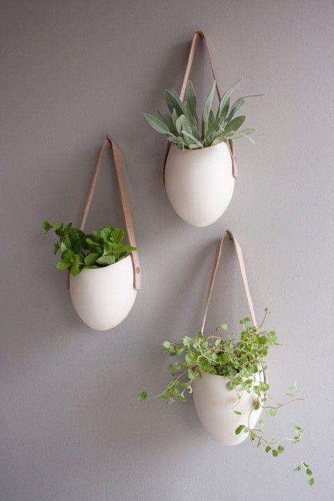 plantas-en-casa-18